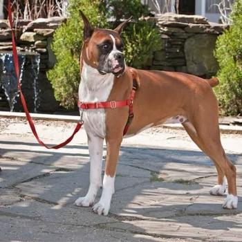 Arnes para perro Petsafe Easy-Walk