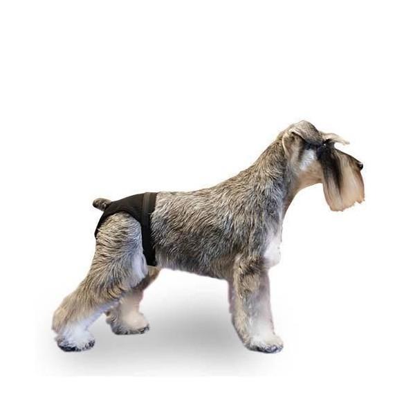 Braguita perro