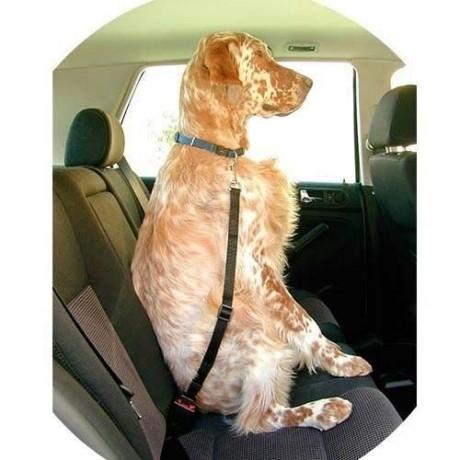 Correa ajustable para perro en coche