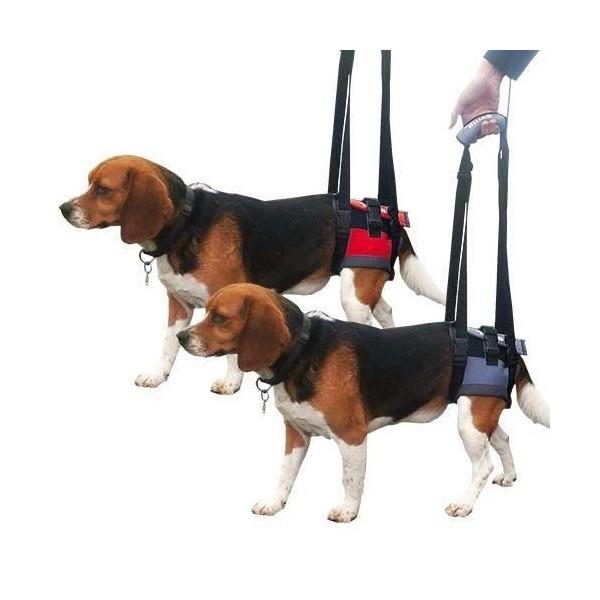 Arnes para perro ortopedico trasero