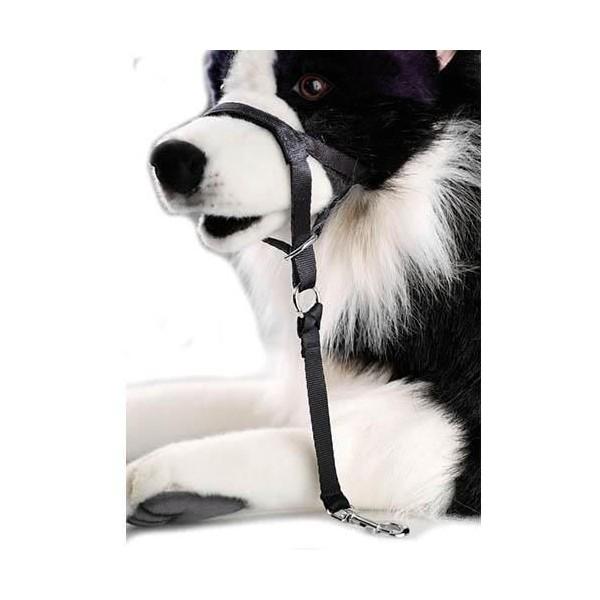 Guiador controlador para perro D&D