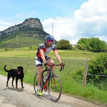 Muelle para perro en bicicleta