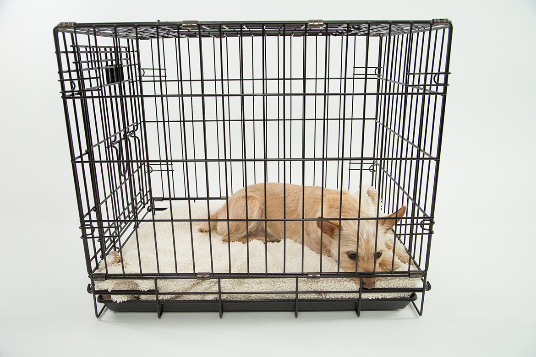 El perro no entra en la jaula